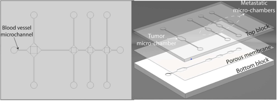 Metastasis on a chip. A top view (left) and exploded view (right) show a model of metastasis using a microfluidic chip. The top lower contains micro-chambers, separated from a bottom layer containing a microfluidic channel by a porous membrane. Eslami Amirabadi, H., Luttge, R., & den Toonder, J. M. J. (2013). Cancer metastasis-on-a-chip. Technische Universiteit Eindhoven
