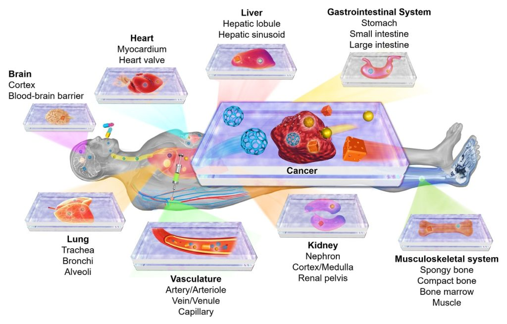 Organ-on-a-chip and disease-on-a-chip platforms for modeling human physiology and pathophysiology.