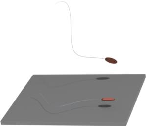 sperm motion, microfluidics