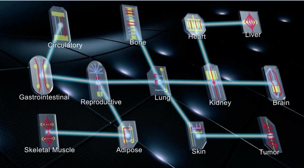 Multiple organs-on-chips