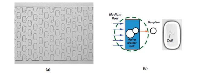 microfluidic dissection