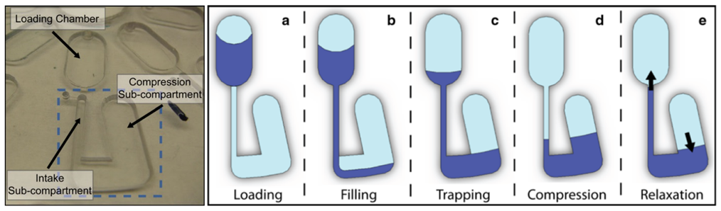 Photo of the CD used by Gorkin et al. and the 5 stages of pneumatic pumping in the CD. Compression of the air in the compression sub-compartment happens because of the disc rotation. The final relaxation stage is attained by slowing the disc rotation.