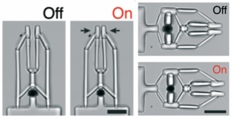 Figure 2. Left: Microgripper in the relaxed and actuated state. Right: Inverted microgripper mechanism in the relaxed and actuated state. Scale bars: 100μm.8