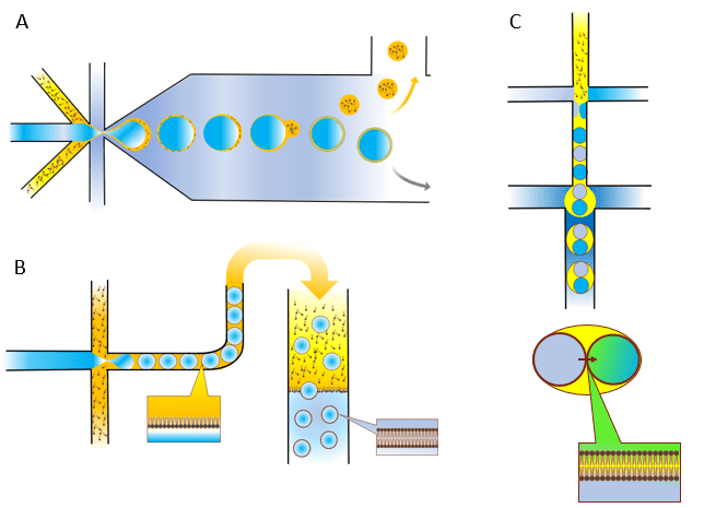 Microfluidic techniques used to generate liposomes