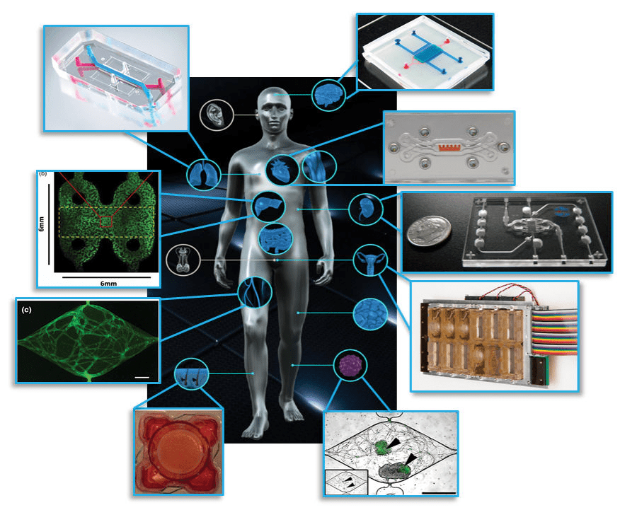 organ on chip systems