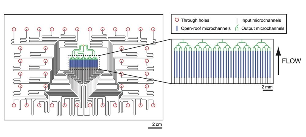 Schematic of a microfluidic network for drug delivery to tumor slices