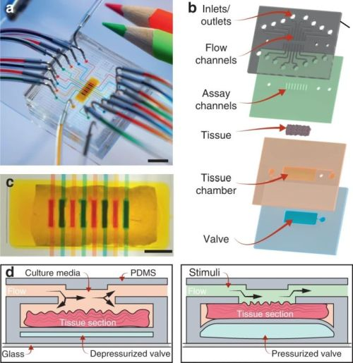 Microfluidic device for multiplex assays on tissue slices