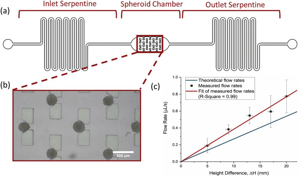 Microfluidic device for spheroid culture and trapping